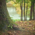 Ładny oraz {czysty zieleniec to nie lada wyzwanie, zwłaszcza jak jego konserwacją zajmujemy się sami.